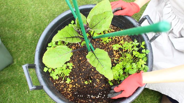 植え付け後、ほとんどの作物は元肥(もとごえ)の肥料効果が薄れてくるため、追加で肥料を施す必要がでてきます。この追加で施す肥料のことを追肥(ついひ)といいます。元肥(もとごえ)と求められる効果が違うところは、生育中の作物に早急な効果が求められる点にあります。そのため、追肥(ついひ)には速効性のある化成肥料が使用されることが多いようです。(有機肥料でも速効性のものがありますが、肥料障害の起こらないよう完全に発酵済のものを使用ください)  追肥を施す場所は、作物が肥料を吸収しやすいように根の先に施します。作物の根の先がどの辺は分からない方は、目安として伸びた葉の先の真下の土に施すと良いでしょう。  作物によって追肥(ついひ)の必要のないものもありますので、必ず作物ごとの育て方をご確認下さい。