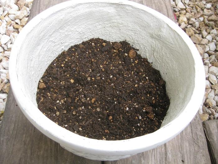 その上に肥料入り培養土を入れます。(鉢の高さの2分の1くらい)