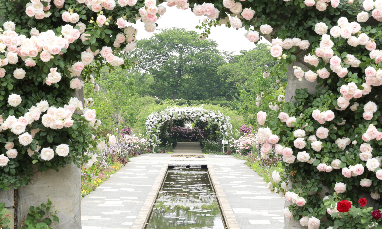 群馬県館林市にある東武トレジャーガーデンは、まるで海外旅行に行ったようなバラの風景を楽しみたい方におすすめです。