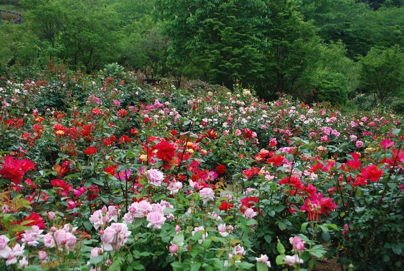 茨城県フラワーパークの魅力はバラ園だけではありません。