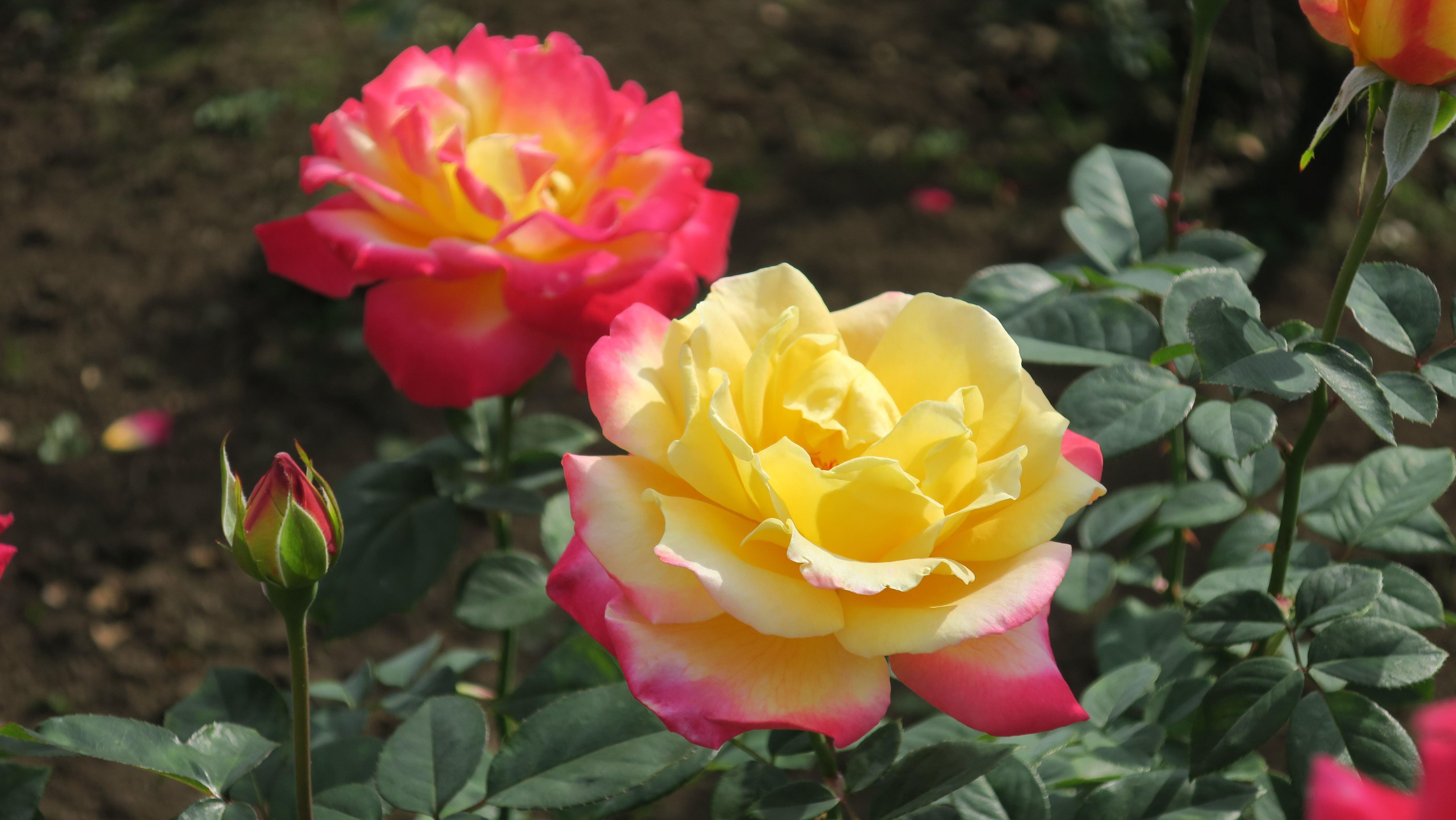 雑木林・芝生広場・大温室など、バラ園以外にも見どころいっぱいの神代植物公園。広い園内は歩いているだけでも一日たっぷり楽しむことができますよ。家族でバラを楽しむのにもぴったりのスポットです。