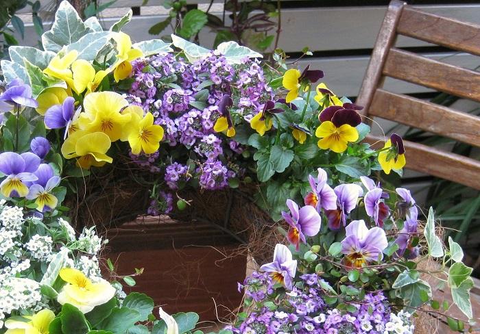 このようにアイビーは、インテリアグリーンとして主役にもなることができる反面、花を引き立てる脇役的役割や、花ばかりの中に爽やかさをプラスする役割もできます。