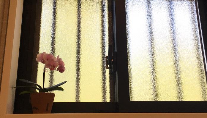 胡蝶蘭(コチョウラン)を贈答用でいただいたけど置き場所に困った! なんてこと、ありますよね。胡蝶蘭(コチョウラン)は環境に慣れる性質を持っているので、日がガンガン当たるところでなければ意外に場所を選びません。あまり日の射さないトイレや北向き窓に植物を置きたいと思っている方、多肉植物など植物を置いてもうまく育たなかった…という方も結構いらっしゃるのではないでしょうか? さらに花も鑑賞できたら尚更いいですよね。胡蝶蘭(コチョウラン)はそのような場所でも順応し、花も咲かせてくれます。
