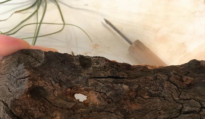大きさは根元が入るくらいの小さめの穴で大丈夫です。
