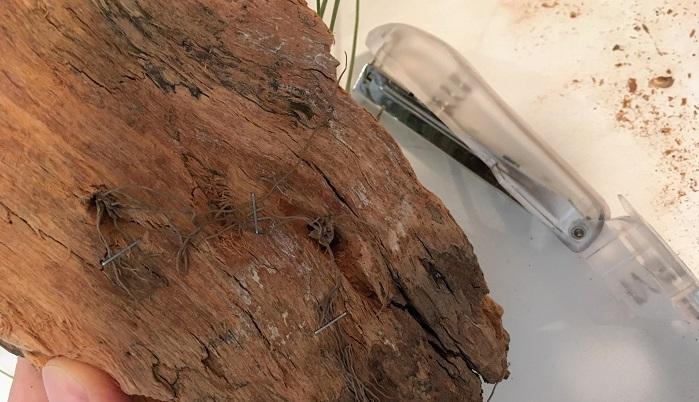 ホチキスを開いて使用します。根を通すとき出来るだけ根がちぎれないよう優しく扱いましょう。一カ所だけでなく、複数個所を止めておくと外れにくくなります。