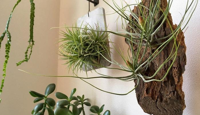 これからこのバークにモリモリ根をはって成長してほしいものです!