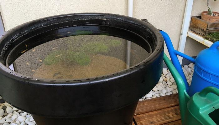 我が家のビオトープの容器は置き場所がマンションのベランダなので軽量&シンプルなイケアの植木鉢カバーを選びました。陶器の睡蓮鉢にも憧れていますが、プラスチックで軽量なので移動などが楽に出来るので5年程愛用しています。デメリットはプラスチックで黒色なので水道のカルキでしょうか?洗っても取れない汚れがついてしまっています。