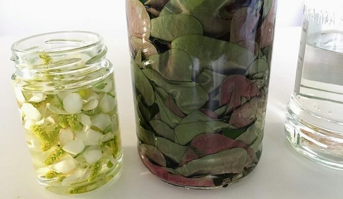 アルコール(果実酒用のホワイトリカーやウォッカなど)を花と葉がひたひたに浸かる9分目位まで入れます。アルコールはエキス抽出だけでなく防腐も兼ねています。35度以上の焼酎や、40度のウォッカがお勧めです。  1日に1回、ドクダミが空気に触れないよう瓶を軽く振りましょう。しっかり蓋をしてそのまま1ヶ月~3か月程冷暗所で保管し、最後に葉と花を取り出したらドクダミチンキの完成です!