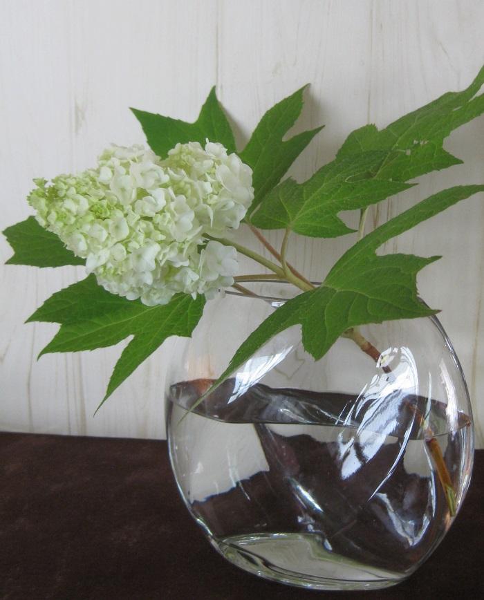 カシワバアジサイの花はとてもボリュームがあるので、1輪飾るだけでもとても華やかです。