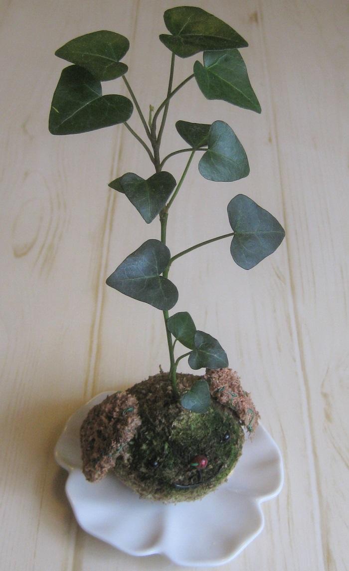 4.アイビーの苔玉仕立て アイビーは、苔玉の中に植えて育てる事もできます。こんなかわいい状態で販売されていることもありますよね。苔玉が乾ききってしまった時には、水に漬け込んで水分を吸収させてあげます。キッチンに置いておくと、水やりを忘れてしまうことが少なくなり安心です。