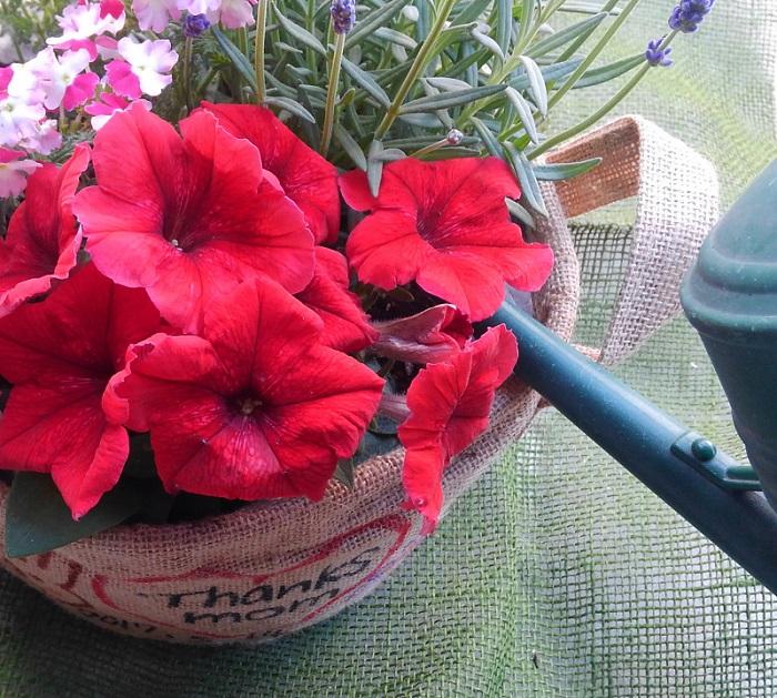 水が花や葉にかからないように、根元にたっぷり水をあげます。新しい土は水を吸収するまでに少し時間がかかります。ゆっくりと、何度かに分けて水をあげましょう。