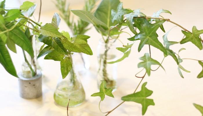 植物とともに暮らそう。  植物は言葉を話さないけれど、人間が暑いと感じる日は植物も同じで葉がしおれうつむいたり、人間が穏やかなさわやかさを感じる日は、植物の葉もみずみずしく気持ちがよさそうに感じます。お世話の仕方によって、植物は生き生きしたり、元気がなくなったり。