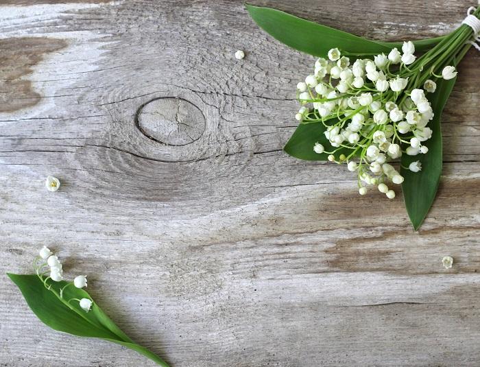 5月1日は「すずらんの日」。フランスでは5月1日に愛する人やお世話になっている人にスズランを贈る習慣があり、もらった人には幸運が訪れると言われています。心温まる素敵な習慣ですね。  花言葉は、「再び幸せが訪れる」「純粋」です。