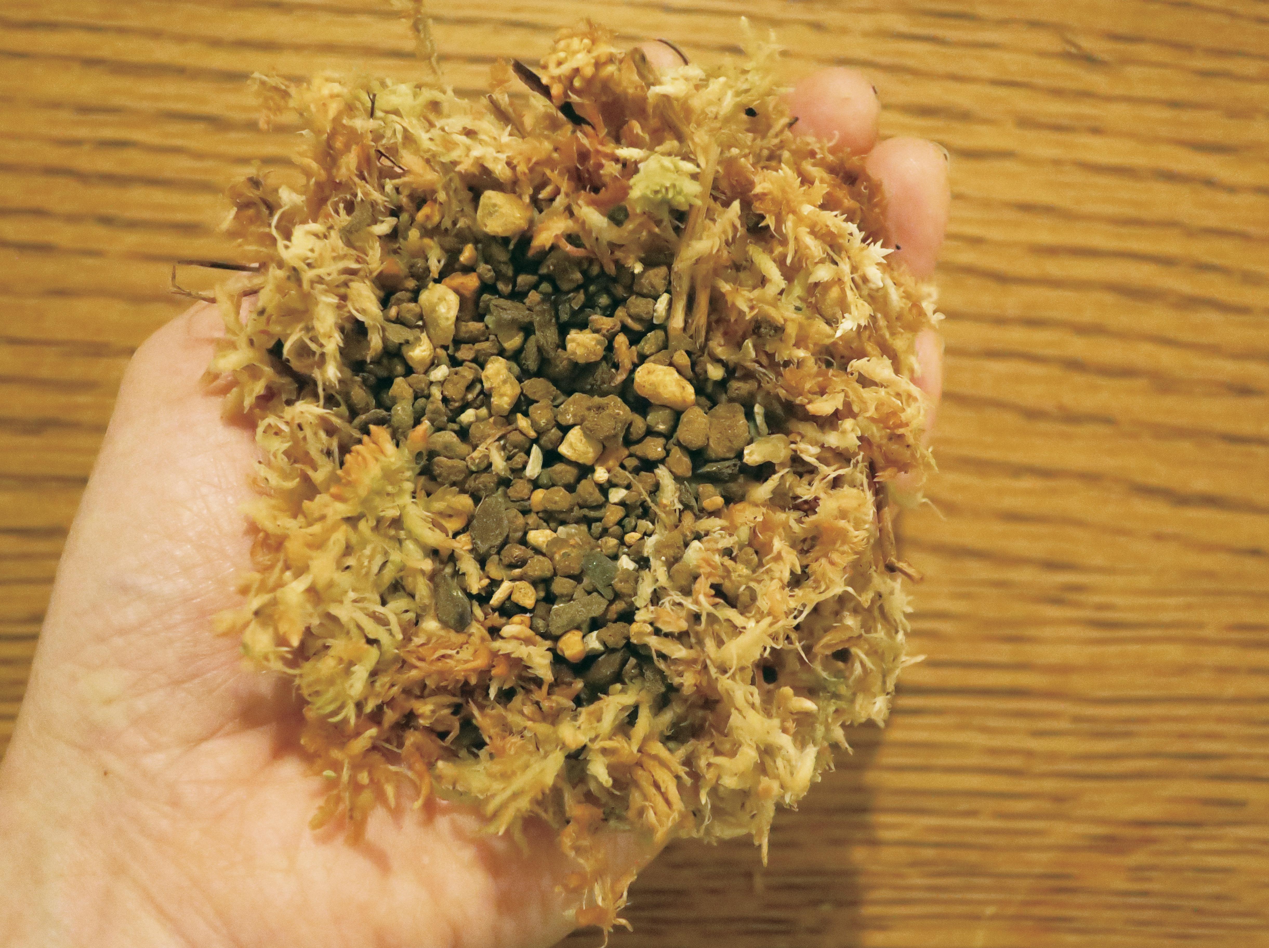 ①水苔は湿らせておきます。水苔を手にのせ、軽くくぼませて土を入れます。