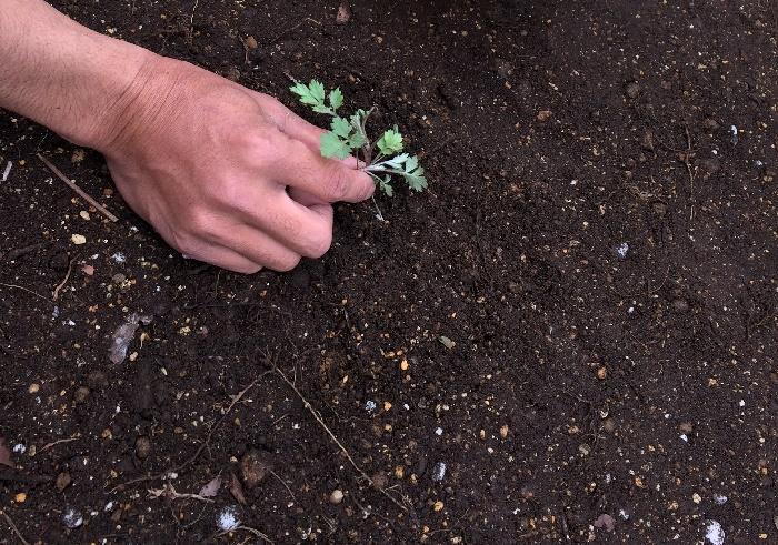 ①草は根っこまでしっかり取り除きます。根っこが残ると雑草が生えてくる原因になります。  ②砂利は3cm~5cmの厚みで敷くので、深さを確認しましょう。