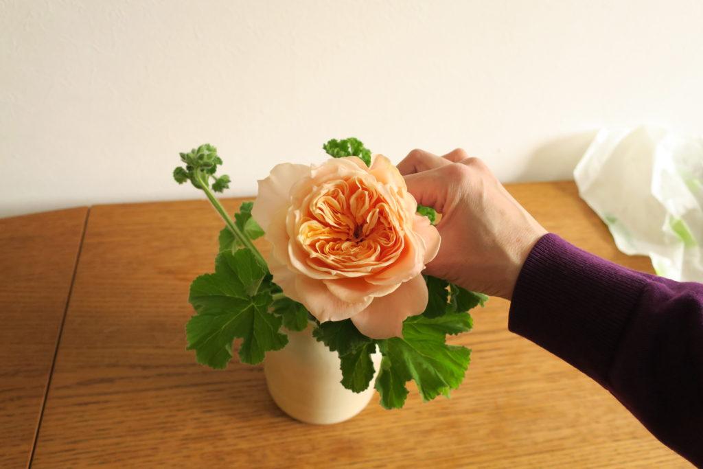 バラをハーブ・ゼラニウムの間に差し込む
