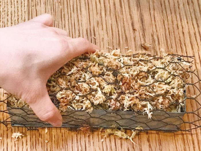 ②水苔をのせたら亀甲金網を被せて麻紐で固定します。