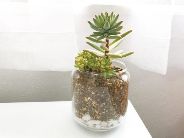 ガラスを使った涼しげな多肉植物の寄せ植え。たくさんの種類がなくてもできます。水やりは1週間くらい後に行います。鉢底に穴がない器は、底に余分な水が残らないように水やり後すぐに傾けて、水を切りましょう。