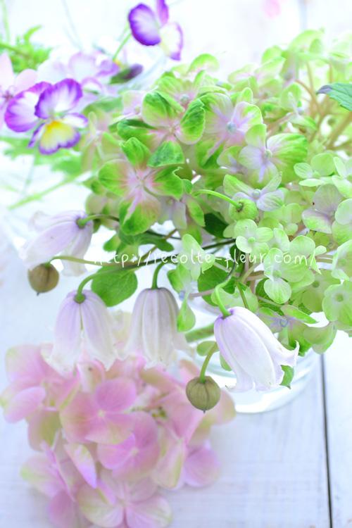 ヴィオルナ系、テキセンシス系のクレマチスは、最近は切り花としても流通しているので、花屋さんで見かけたことのある方もいらっしゃるかもしれません。切り花の場合は、「ベル咲き」と表現されることも多いようですが、壺型、ベル咲き、どちらも同じです。