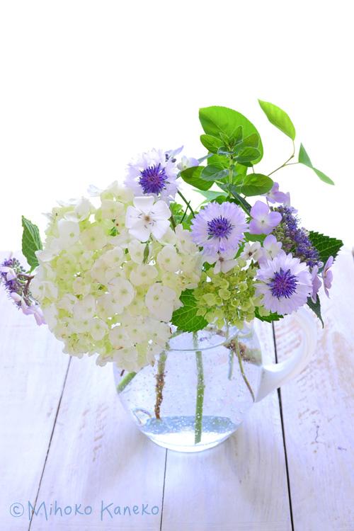 白いアジサイは<strong>「西洋アジサイ」</strong>、両脇のブルーのアジサイは<strong>「ガクアジサイ」</strong>。</p> <p>もともとはガクアジサイは日本が原産ですが、西洋に渡って交配されたものが西洋アジサイ。今では切り花として流通しているのは西洋アジサイがほとんどです。