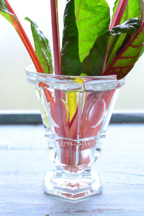 スイスチャードは茎の色が美しいので生けても素敵です。