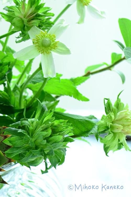 緑の花は、グリーン色のスプレーバラ、グリーンローズ。中国原産のオールドローズです。緑色なので、花と葉っぱの中間のような使い方ができて、人気があります。