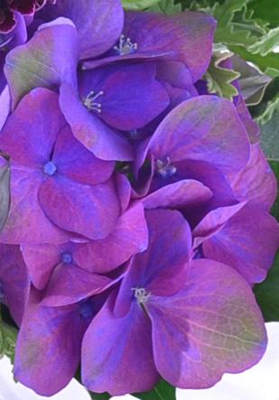 最初は青みがかった紫色でした。