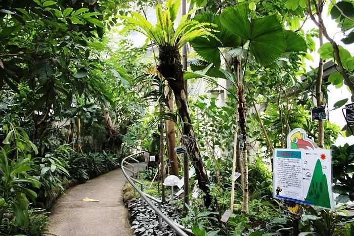 熱帯環境植物館3温室 熱帯低地林 1