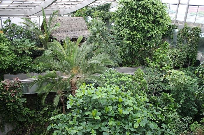 東京都板橋区にある熱帯環境植物館(グリーンドリームねったいかん)は、知る人ぞ知る穴場の植物園かもしれません。3つの植生ゾーンに分かれた温室、熱帯の高山帯を再現した冷室、ミニ水族館などの施設があり、東南アジアの自然を海から山まで体感できるスポットです。  ▼下3枚の写真は温室の様子。潮間帯植生、熱帯低地林、集落景観のゾーンに分かれます。