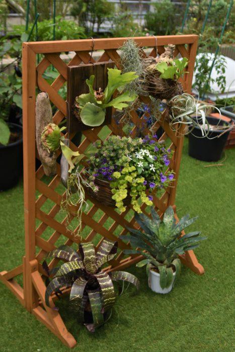 壁に掛けた植物たちの下に、フリーセアなどのタンクブロメリアを置いておくと、湿度が上がりやすくなります。