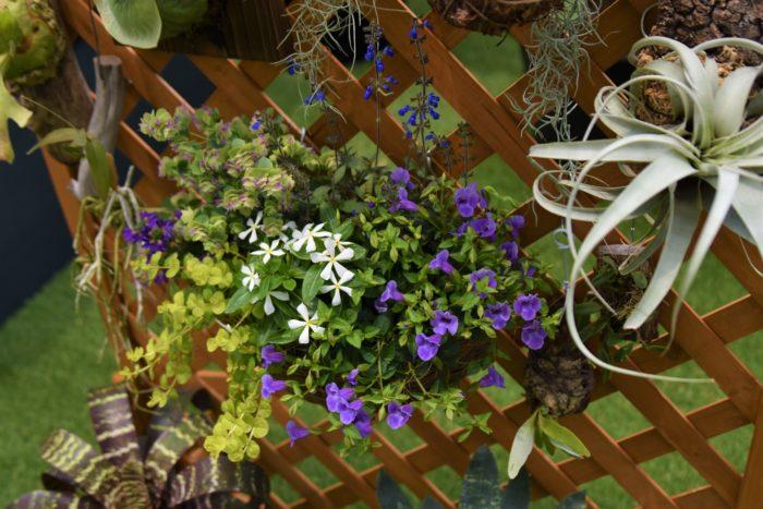 着生植物は基本的に緑色なので、紫や白い花の寄せ植えを使うとワンポイントになってオススメです。