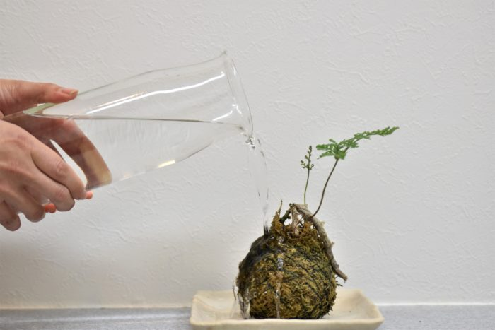 室内に置いてある植物に水をあげたら換気が大事です。  風通しをよくしないと、湿った土が中々乾きません。土がずっと湿った状態が続くと、根腐れしてしまう可能性があります。  だんだんと気温が高くなる時期は、部屋の窓を閉めて出かける方が多いと思いますが、密封された暑い部屋で、土が乾かないと根腐れしてしまう可能性があります。  水やりをしたら、土が乾くように風通しを良くしましょう。  平日でかけてしまう方は、休みの日の朝に水やりをする、帰ってきたら水やりをして換気をするなど気をつけたいところです。