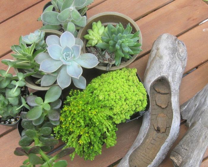・多肉植物 ・セダム ・器 ・鉢底ネット ・培養土 ・軽石(あれば) ・水苔(水に浸して湿らせておく) ・土入れ ・スプーン