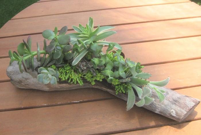 多肉植物とセダムを植え終わったら、蒸れを防ぐために水やりは控えめにして一週間ほど半日陰で管理します。  その後の水やりは、表面の水苔が乾いたらたっぷりとあげます。雨が直接あたらない、ベランダや軒下などの明るくて風通しの良い場所に置きましょう。真夏の強すぎる直射日光は苦手で葉が焼けてしまいます。やわらかい日が当たる環境が大好きです。また、あまりにも日が当たらないとヒョロヒョロと徒長してきます。多肉の状態をよく見て、気持ちのよさそうな場所に置いてあげるといいですね。