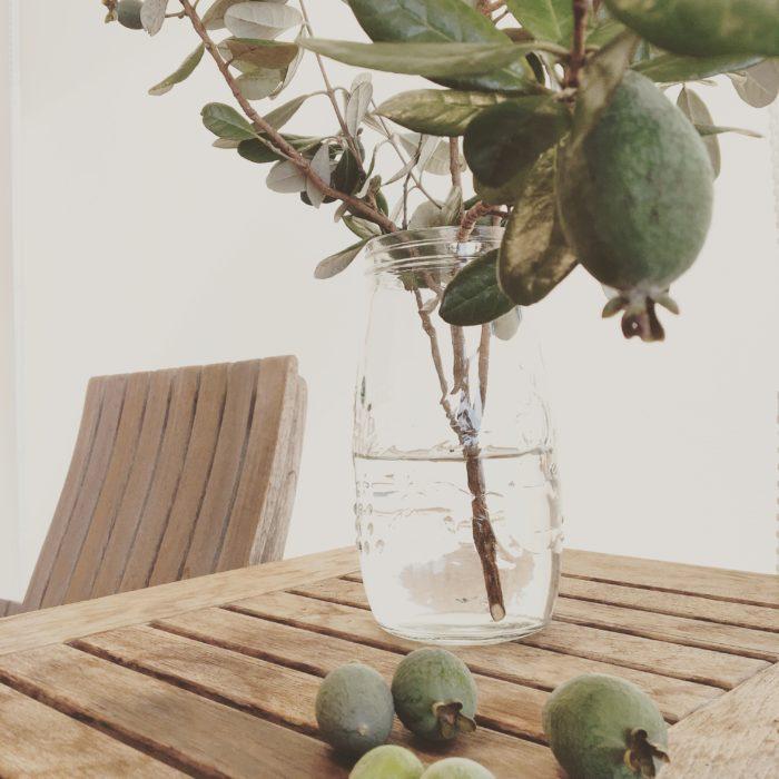 このフェイジョアは枝付きのまま花瓶に活けても、とてもお洒落に飾ることができます。  葉の表は緑色、裏は白っぽい色をしているので色の変化も楽しめ、シンプルなお部屋にとても良く似合います。