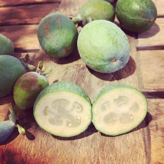 もちろん花の後は、お楽しみの実も食べられます♪  品種によって時期は異なりますが、収穫は10月下旬~11月上旬頃です。  (1本でも実がなる品種もありますが、2品種以上を混植することで、より実つきが良くなるようです。)一般的な果物と同じように、周りの皮をむいて食べます。  果実は甘酸っぱくて、熟すと甘い芳香があります。  他の果物に例えると、洋梨のような味わいです。