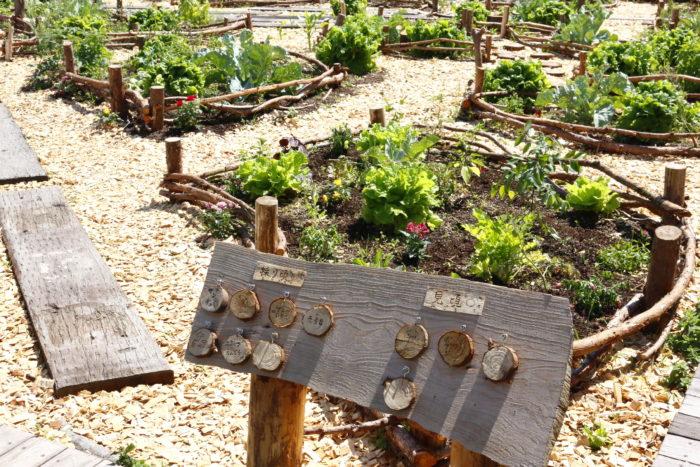 リニューアルオープン最大の目玉スポットで、今回募集を開始したポタジェゾーンのご紹介をいたします。  ポタジェとは、果樹・野菜・ハーブ・草花などが混植した、実用と観賞の両目的を兼ね備えた菜園スタイルのお庭です。フランス式家庭菜園で、食べるだけでなく、見た目も楽しむ家庭菜園です。  このポタジェの見た目の楽しさを、最大限に可能にしてくれたのが、こちらの樹をふんだんに使った菜園です。