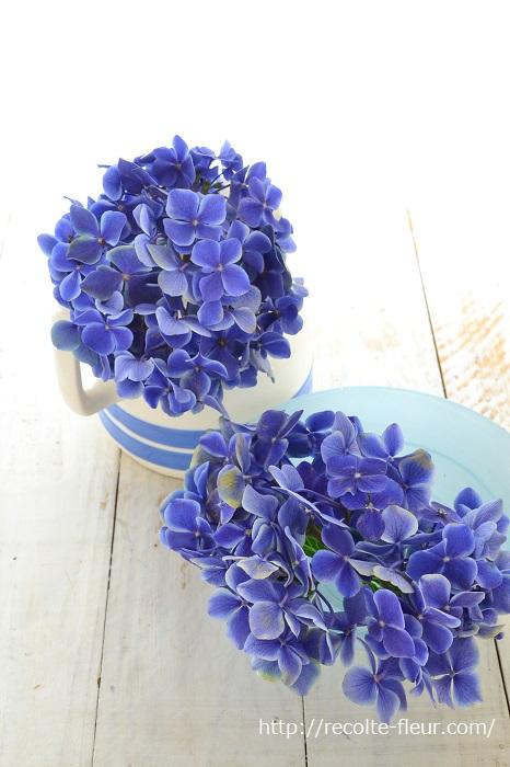 剪定したあじさいは2節分しかありません。花屋さんで売っているあじさいより丈はかなり短いはず。選ぶ花瓶は、花丈にあわせて低めのものをセレクトしましょう。  お気に入りの雑貨やカフェオレボウルのようなキッチン雑貨に、シンプルに剪定したあじさいをそのまま飾っても素敵です。写真はブルーのアジサイなので、生ける器もブルー系を選んで爽やか、涼やかな仕上がりに。
