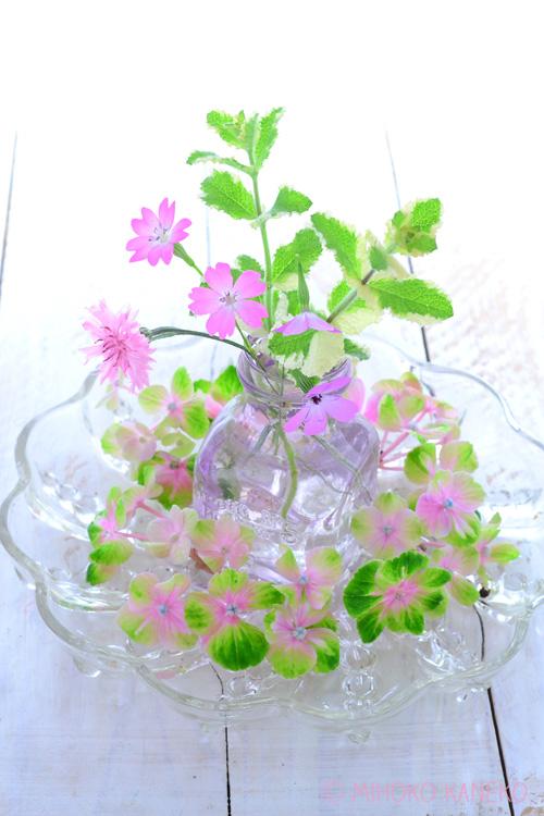 草花を育てている方は、あじさいの花色にあわせて、季節の草花とあわせて生けてみてはいかがでしょうか。ヤグルマギク、ビスカリア、パイナップルミントとあじさい。茎の細い草花を少ない本数で生ける時は、花瓶の口が細めの方が花が収まりやすいです。