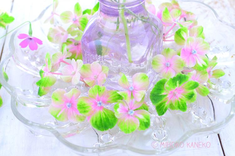 まだきれいなあじさいを剪定してしまうのは、もったいないなぁと感じてしまうかもしれませんが、鉢植えのあじさいは、少ない養分で生きているので、来年の花にエネルギーを回すためにも7月半ばまでに切ることをおすすめします。切ったあじさいは、おうちの花あしらいとして飾ってみてください!