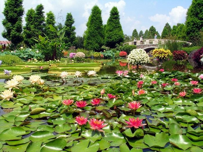 みずの森花影の池 1