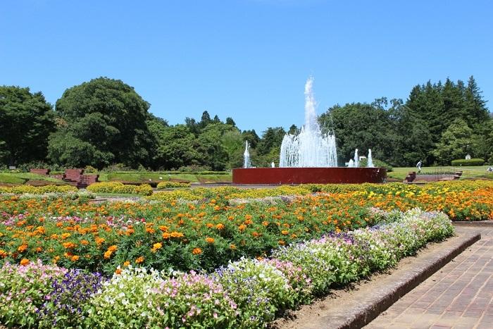 茨城県植物園は茨城県の那珂市にある植物園で、植物園・熱帯植物館・県民の森などの施設で多様な姿の植物を楽しむことができます。