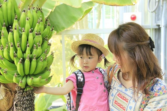 バナナ温室 (2) 1