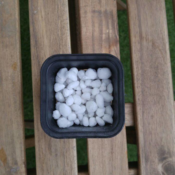 鉢底に軽石を敷きます。