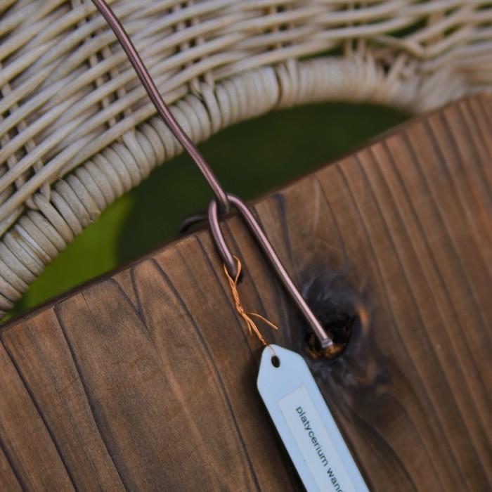 板などの、大きな着生材料を使う場合は太い園芸用針金を用意します。  ヘゴと同じように、板に穴を空けて針金を通し、手前の針金を固定するように奥の針金を絡ませます。