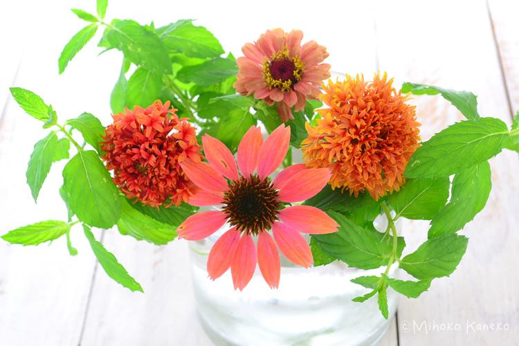 切り戻したミントを花瓶に入れてその茎にひっかけるようにすると、花が固定しやすくなります。  ミントを生ける上での注意点は、水に浸かる部分の葉っぱは取り去ること。ミントに限らず、葉っぱが水に浸かっていると、水が汚れる原因となります。夏場は特に注意しましょう。