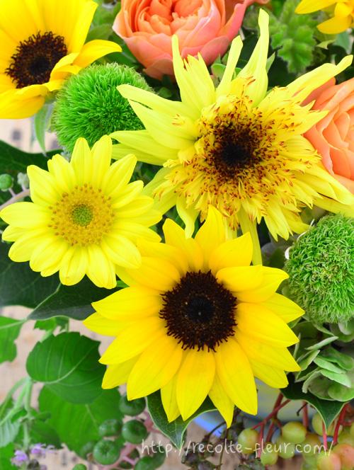 黄色いひまわりも中心の色やフォルムが違うと印象はがらりと変わりますね。
