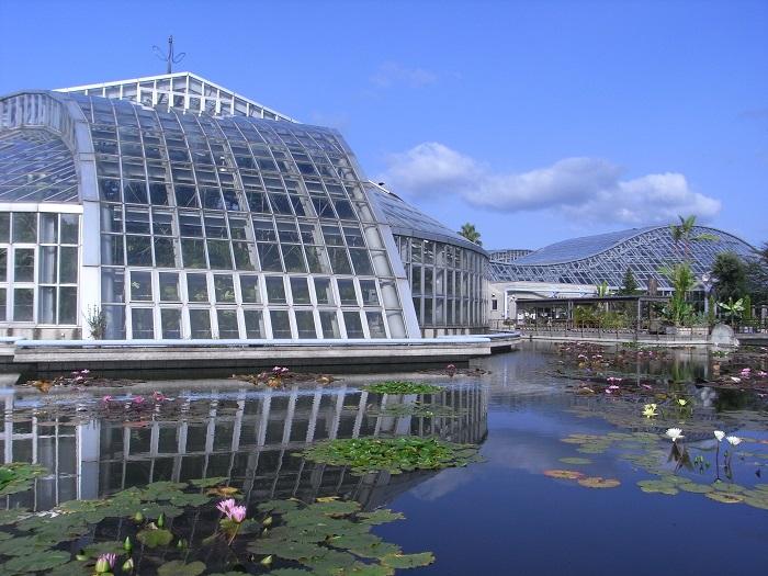 京都府立植物園は、日本で最も古い公立総合植物園として知られています。なんと大正13年に開園したというから驚きですね。この植物園の魅力は日本最大級の観覧温室!展示植栽植物は約4500種類に及び、世界の熱帯植物を身近に観賞することができます。また自然林・植物生態園なども整備され、都市部の人混みを忘れてゆったりとくつろぐことのできるスポットとなっています。