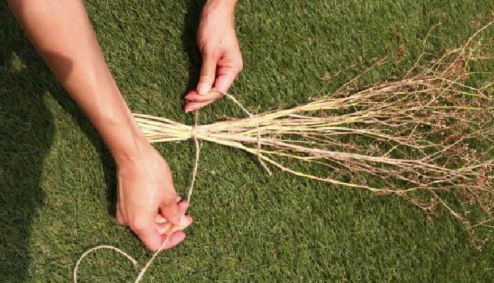 地際から切り取り、茎ごと束ねて風通しの良い環境で、乾燥させます。