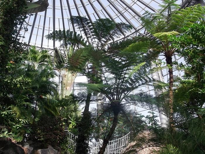 三陽メディアフラワーミュージアム 千葉市花の美術館は、千葉県千葉市の稲毛海浜公園内にある植物園です。前庭・アトリウム・温室など、多くの展示があります。  また稲毛海岸に直面する公園内には三陽メディアフラワーミュージアム以外にも、プールやバーベキュー施設など遊びの施設がたくさん。植物園だけでなく親子で一日海辺を楽しめるスポットといえるでしょう。